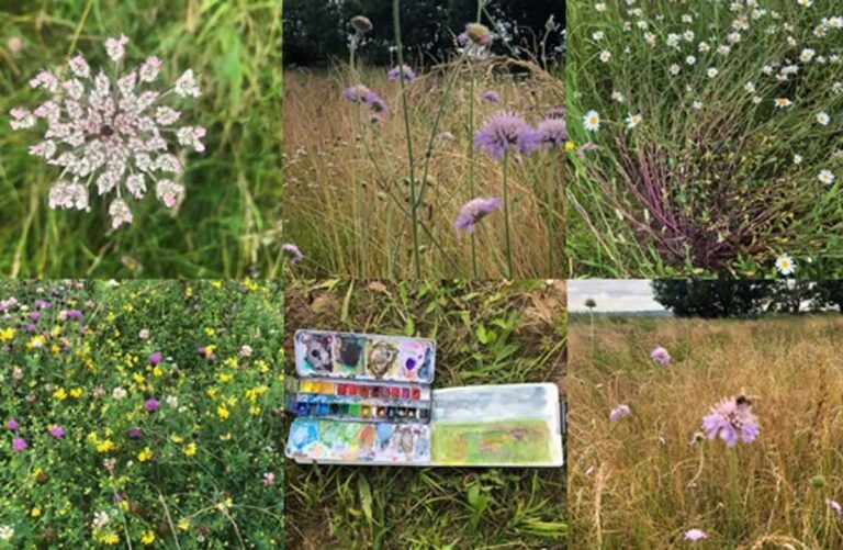 RSPB Blacktoft Sands – Summer Meadow Stroll & Paint